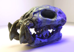 Skull Test Render May CGChallenge