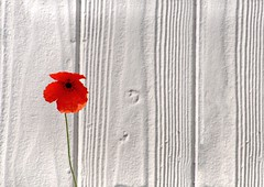 (Heidelknips) Tags: flowers urban flower wall 50mm nikon poppies minimalism mohn industriegebiet d90 yourfavs