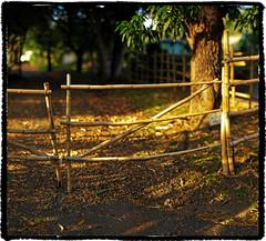 Bamboo Fence (JN) Tags: panorama hawaii bokeh honolulu wideopen 85mmf14d moanaluagardens nikon85mmf14 d700 nikond700 ryansstrangelenses bokehpanorama brenizermethod