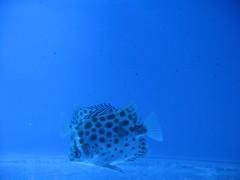 (Ali Mirghaderi) Tags: road sea white fish water aquarium shark persian sand underwater iran whitesands persia ali iranian pars esfahan  irani         parsi         alimirghaderi imadmiral    mirghaderi