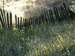 Old Fence #2.jpg (YOSEMITEDONN) Tags: green fence legacy oldgrass flickrvault selectbestfavorites