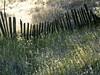 Old Fence #2.jpg (YOSEMITEDONN) Tags: green fence legacy oldgrass flickrvault selectbestfavorites