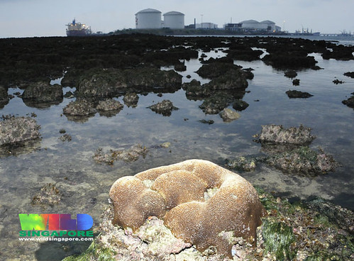 Pulau Sebarok from Pulau Jong