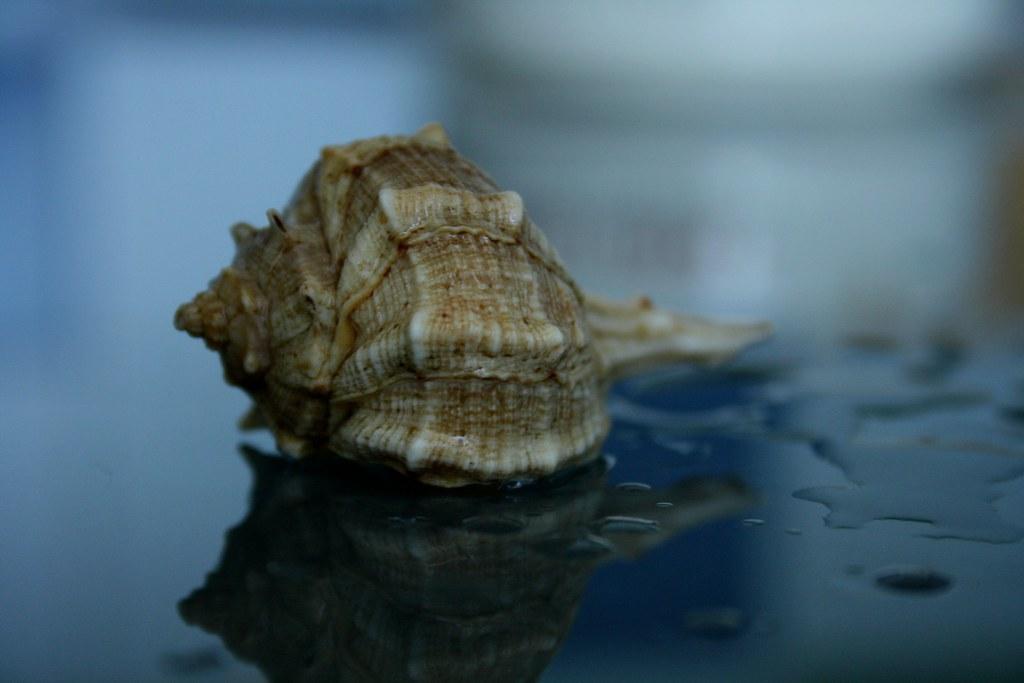 caracola sin mar