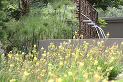 Flickr Landscaping (Badec Bros Landscaping) Tags: flowers trees summer flower tree art architecture modern garden landscape contemporary stunning waterfeature irrigation gabions koiponds landscapingarchitecture moderngardens badec kingfisherlandscaping badecbroslandscaping gabionwaterfeatures badecbrosdeco featurepoles