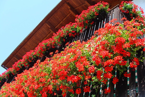Mettete altri fiori sui vostri balconi!  -  Put more flowers on  your balconies!