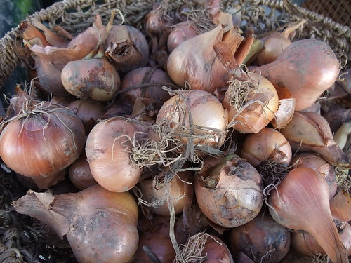 Shallots from Wayward Seed Farm