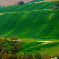 Lines on Green (Osvaldo_Zoom) Tags: trees green grass lines rural landscape nikon fields slope marche macerata d80 periurban