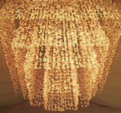7,000 orchids (hanna.bi) Tags: venice wedding yellow san orchids chandelier cymbidium clemente hannabi