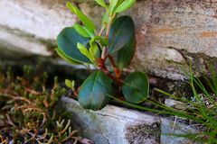 tenacity (EZBAKEFROMHELL) Tags: plant field rock out moss growth shallow depth