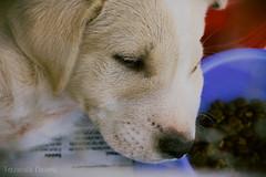 (Fernanda Cerioni ♥) Tags: dog cão animal animals canon puppy perro cachorro 1855mm filhote f3556 t5i