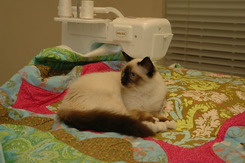 I took his hint and gave up quilting for the night!...