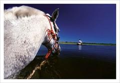 Pantanal - The last Eden (Valdemir Cunha) Tags: wild brazil horse bird nature water brasil landscape farm wildlife wilderness cavalo matogrosso pantanal wetland matogrossodosul fazenda wildplace