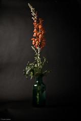 Snap Dragon 3 (T. Scott Carlisle) Tags: flowers botanical tsc tiltshift 5108 tphotographic tphotographiccom tscarlisle tscottcarlisle