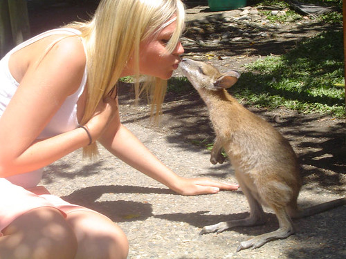 Wallaby Kissing