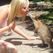 Wallaby kissing - Australia Study Abroad