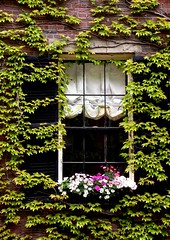 Boston, Beacon Hill - 24 (cienne45) Tags: windows friends building boston architecture garden doors cienne45 carlonatale explore natale bostonma beaconhill exploreexset explore1336