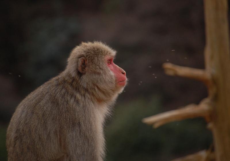 _monkey-23_