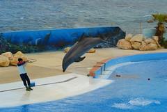 Mediterraneo Marine Park --- Malta (CaptiveDolphins-vs-WildDolphins) Tags: malta dolphins shame delphinarium malte mediteraneo maltagozo marinelands mediterraneomarinepark captivedolphins themediteranneomarineparkinmaltaisashame unehonte unaverguenza dauphinscaptifs themediteranneomarineparkinsliemathemediteranneomarineparkinmalta themediteranneomarinepark dauphinsdelfines delfinescautivos