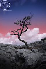 Tree (Frozen in Vision) Tags: pink blue red cloud tree bird birds rock clouds dead grey fly frozen flying lancashire vision isolated lanscape