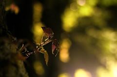 春天。靜悄悄