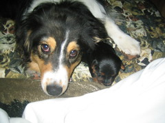 Molly with Teddy she loves the babies