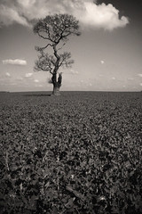 alone (Mark Curzon) Tags: rugeley bowerlane mariastree artofimages bestcaptureaoi