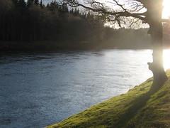 Sunlight on Tay (Joanpix) Tags: scotland rivertay perthshire dunkeld