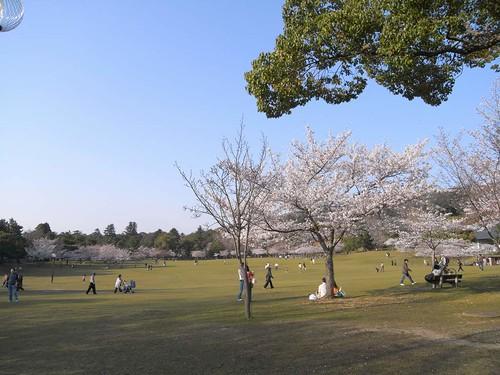 09-04-05【桜】@奈良公園-02