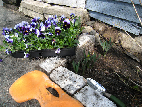 Pansies are In!