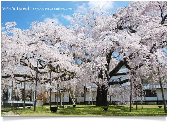 【日本賞櫻】京都醍醐寺賞櫻之旅~靈寶館