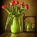 Rózsaszín tulipán