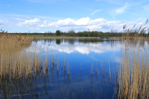 Rainton Meadows Reflections