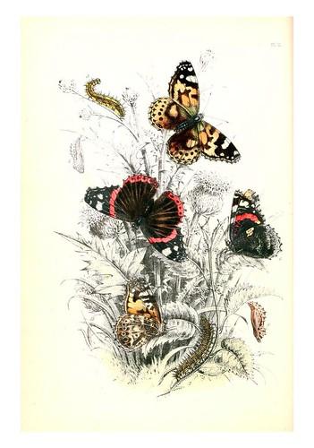 mariposa8