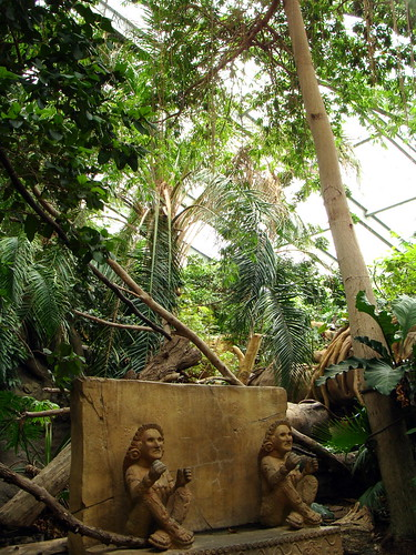 Tropical American Rainforest