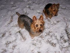 Kaih and Harley in the snow!