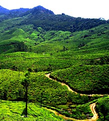 The road of life twists and turns and no two directions are ever the same. Yet our lessons come from the journey, not the destination. (legends2k) Tags: mountains green way estate tea path sony journey destination greenery roads munnar plantations carlzeiss tortuous teaplantations donwilliams sonydscw5