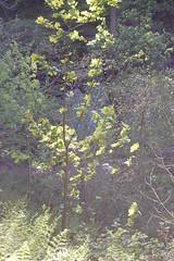 Lynn valley (gordonjc) Tags: scotland lynn valley dalry ayrshire lynnglen northayrshire garnockvalley