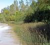 GIANT BULRUSH (Schoenoplectus californicus var. californicus) JUNCO ~ original = (2409 x 2162) (turdusprosopis) Tags: totora junco totoral juncal tule florachilena scirpus totoras plantasdechile certhiaxiscinnamomea cyperales floraargentina juncales schoenoplectus floradechile ciperáceas curutiérojizo plantasargentinas plantasdeargentina plantasautóctonasargentinas plantasautóctonasdelaargentina floraautóctonaargentina floraautóctonadeargentina plantasnativasargentinas plantasnativasdeargentina plantasnativasdelaargentina floradeluruguay plantasuruguayas florauruguaya plantasdeluruguay floradelaargentina floradeargentina plantasautóctonasdeargentina floraautóctonadelaargentina floranativabrasileira floranativadobrasil floradobrasil plantaschilenas argentineindigenousplants schoenoplectuscalifornicus plantsofuruguay cyperáceas floradeuruguay plantasdeuruguay plantsofchile floraofuruguay yellowchinnedspinatail schoenoplectuscalifornicuscameysoják giantbulrush schoenoplectuscalifornicusvarcalifornicus scirpusdecipiens totorales avesdelosjuncales tutura californiabulrush