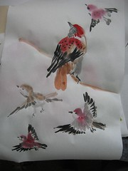 finches study