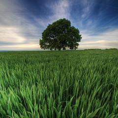 may freshness (Paul Petruck) Tags: sky tree nature landscape serie hdr wondersofnature superaplus aplusphoto