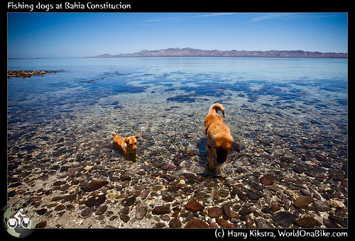 Fishing dogs at Bahia Constitucion