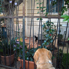 The garden (dangeri.away) Tags: street dog chien pet loving labrador streetphotography perro doc doggie perrito onthestreet streetshot musetto petlover thelittledoglaughed heismylove doggielife miocucciolo ourdailylife myyellowlabrador