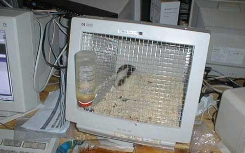 ماذا تفعل بجهاز الكمبيوتر القديم ....؟؟!! 3667690365_f28f8a449e_o