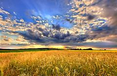 dedicated to Natasha (traumlichtfabrik) Tags: vienna wien sunset sun geotagged austria sterreich long pentax wheat sigma sonne 2009 coordin