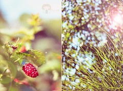 Rest is not idleness, and to lie sometimes on the grass under the trees on a summer's day, listening to the murmur of water, or watching the clouds float across the sky, is by no means a waste of time (zuzana sutkova) Tags: summer sunlight diptych warm natural bokeh sunny shade simplicity flare raspberry rest through lying sunflares bokehlicious light dipy sun through looking trees amazing summer be grass in them