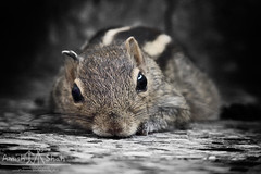 and he will live happily ever after.... (amish_shah) Tags: squirrel tripod goodbye gonetoheaven