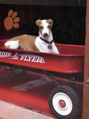 on the wagon (moocatmoocat) Tags: red dog philadelphia animal radio wagon flyer ride