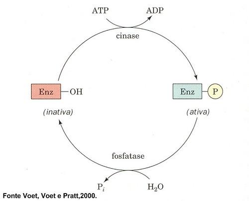 quinasefosfatase