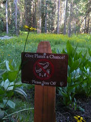 Give Plants a Chance-Yosemite 7/09